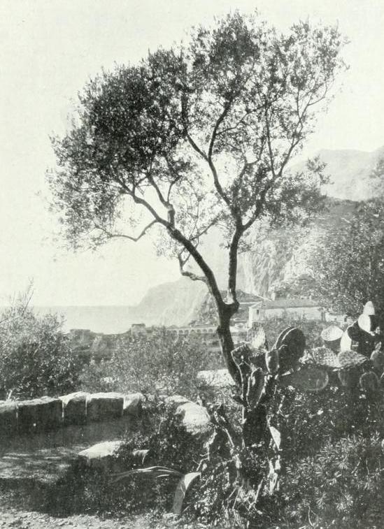 21 CAPRI 1913