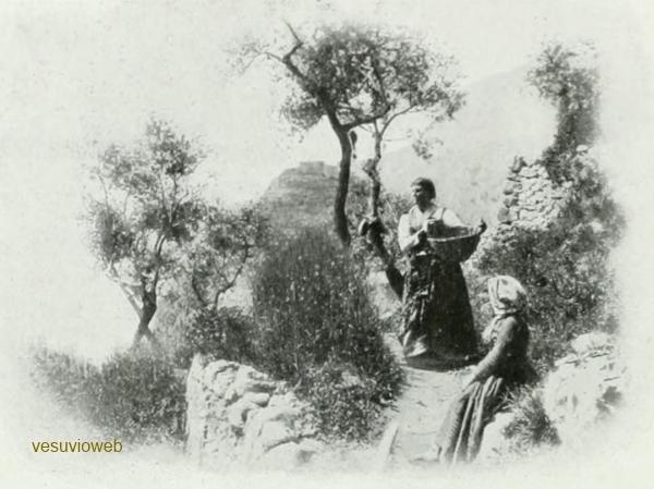 3 CAPRI 1913