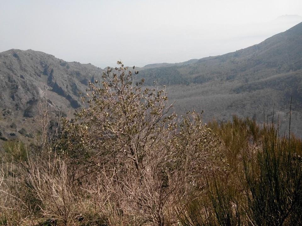 8 - Monte Somma - Nicola Liguoro - vesuvioweb 2016